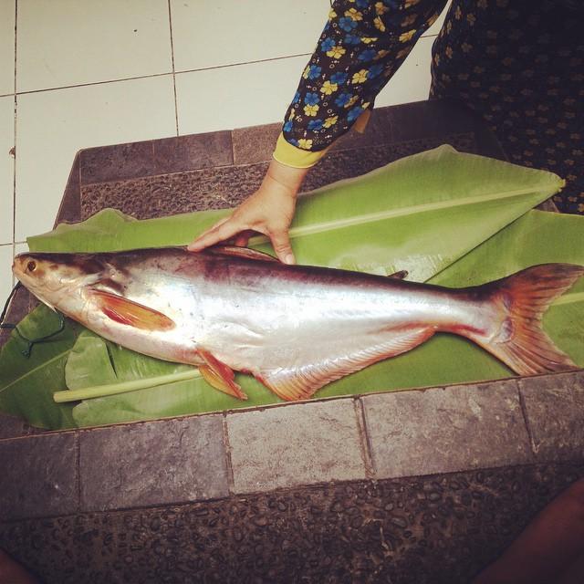 Nyokap pulang2 bawa ikan gede …