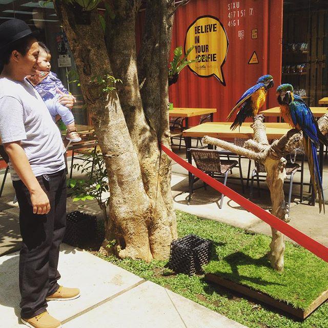 Main ke kafe kontainer burung …