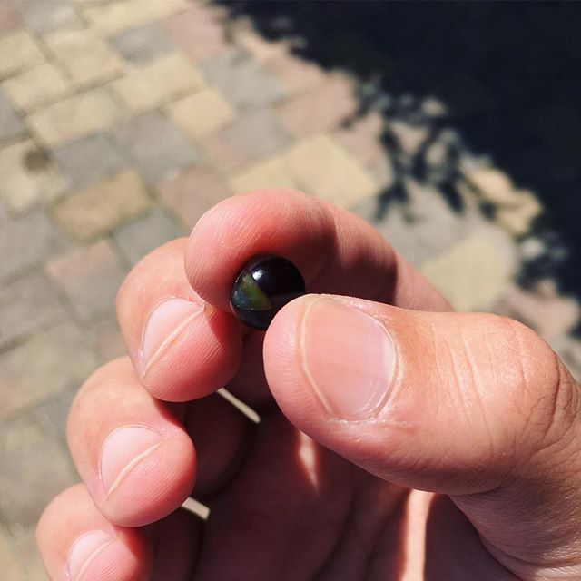 Small grape that is later turn…