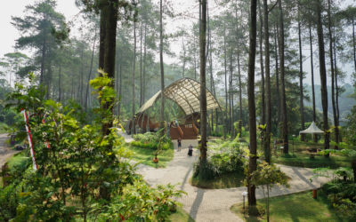 Fresh Breath of Air at Orchid Forest Cikole, Bandung